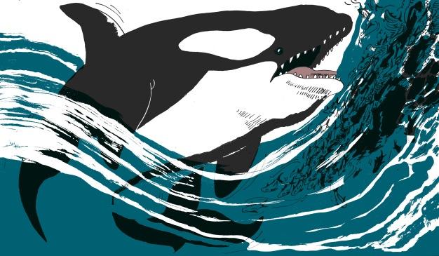 orca+text